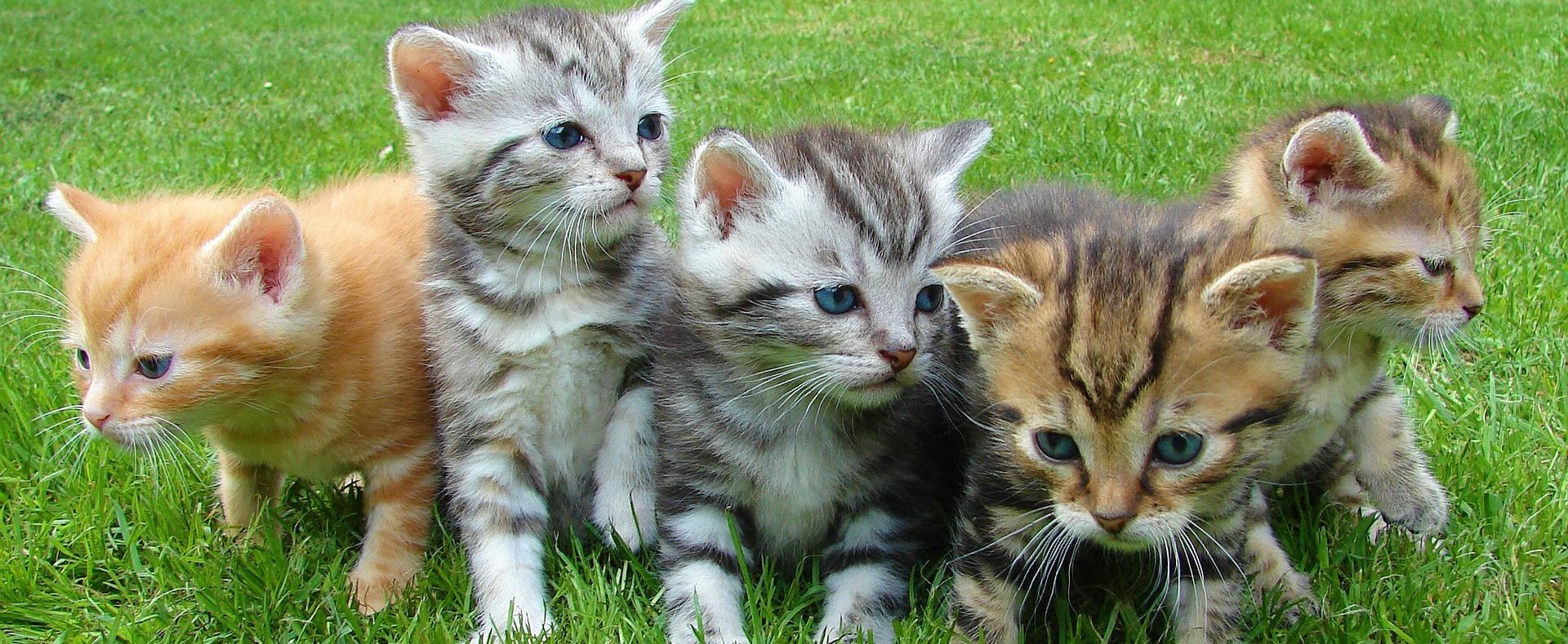 Álomállás macskaimádóknak