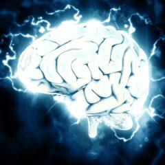 Az ELTE kutatói bizonyítékot találtak arra, mi befolyásolja az intelligenciát