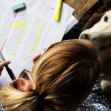 Kutyatartóknak és leendő gazdáknak indul ingyenes képzés